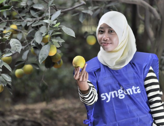 Citrus Farmer