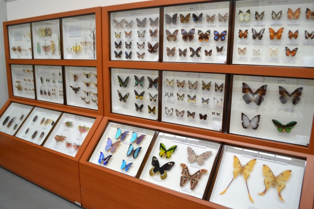 Insects displayed in Fujukan Museum